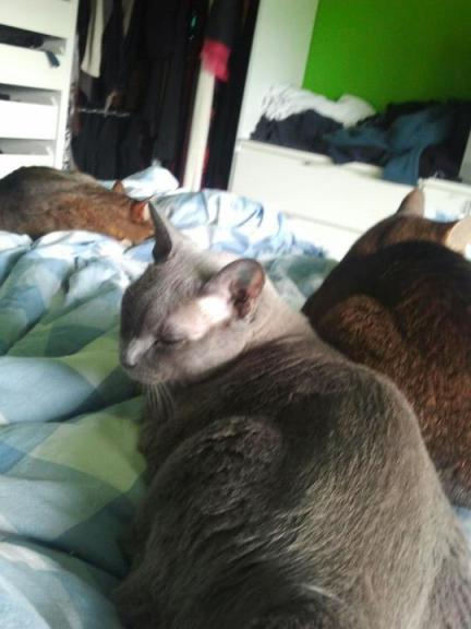 Katter på säng