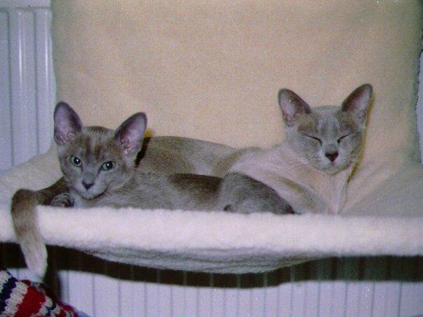 2 gråa burmor