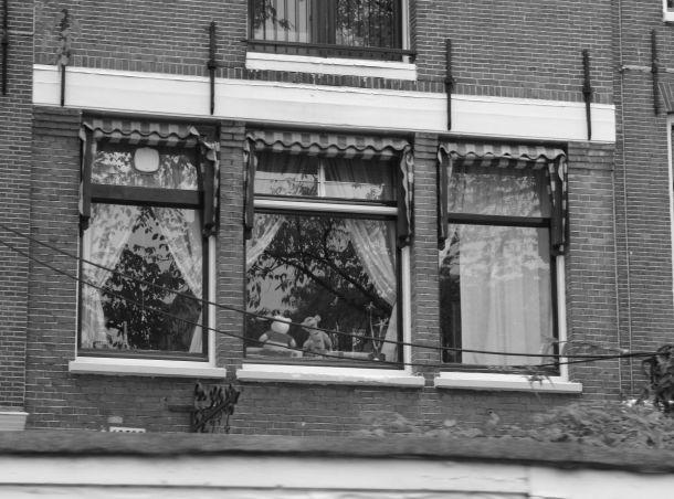 svartvitt vilt fönster