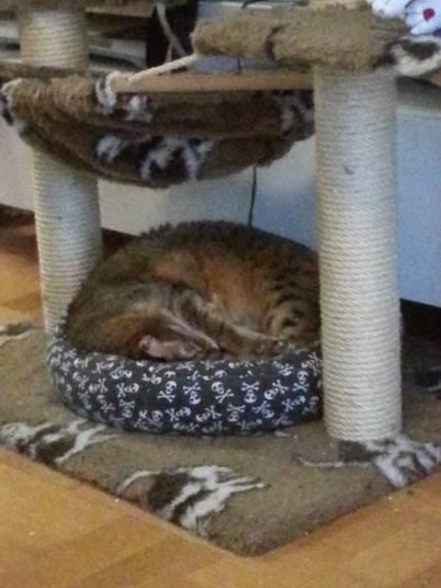 20141009 liten katthög
