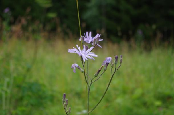blom 2