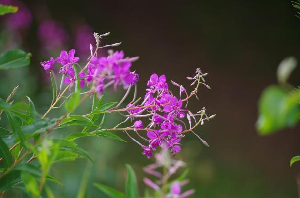 blom 5