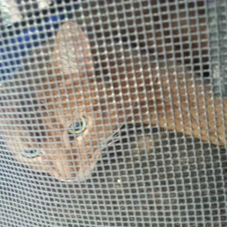 20150713 katt i bur