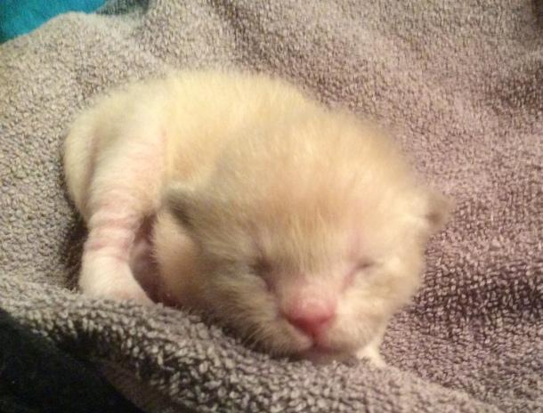 Kattunge 1, 6 dagar