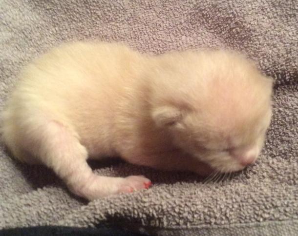 Kattunge 3, 6 dagar